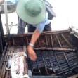 Nghề mới của kinh tế biển : câu mực ban ngày